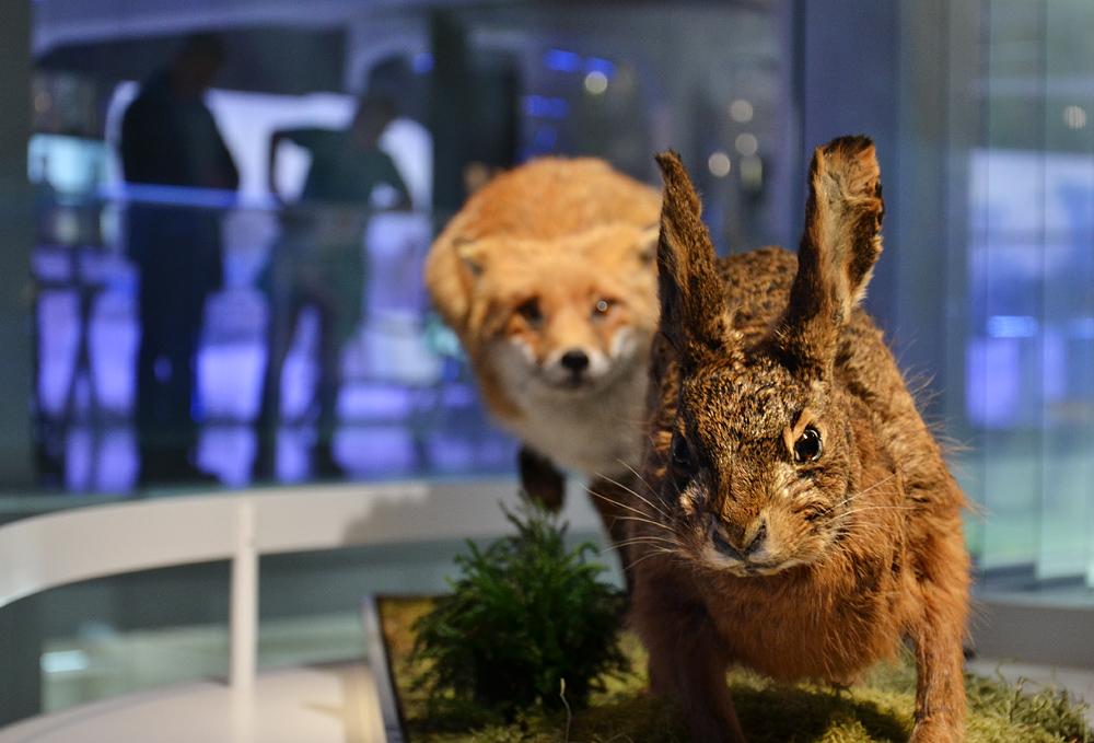 Archäogisches Museum Chemnitz, Fuchs und Hase, Eiszeit