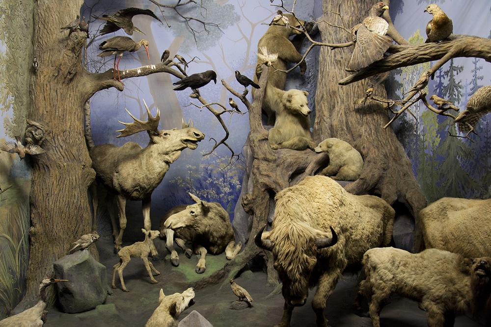 Hessisches Landesmuseum Darmstadt, Diorama Nordeuropa