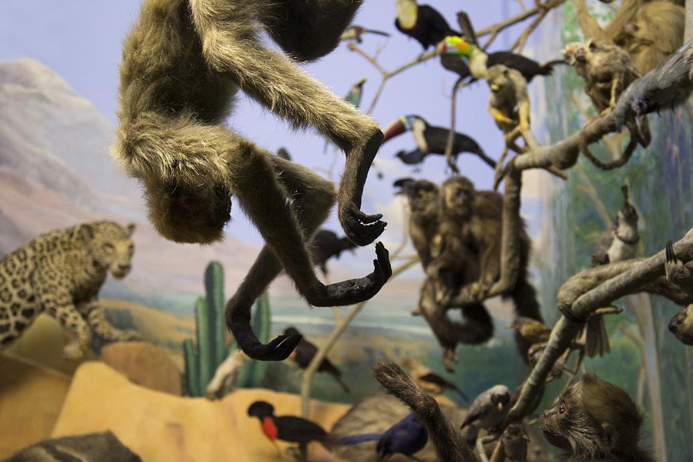 Hessisches Landesmuseum Darmstadt, Diorama Südamerika