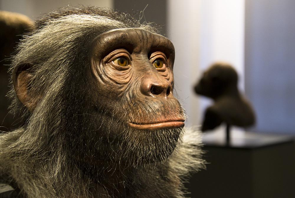 Hessisches Landesmuseum Darmstadt, Lebensgeschichte, Rekonstruktion eines Sahelanthropus tchadensis