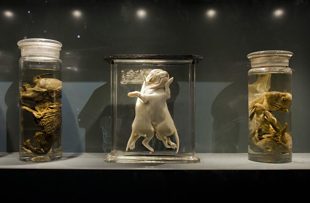 Museum für Naturkunde Berlin, Mutationen