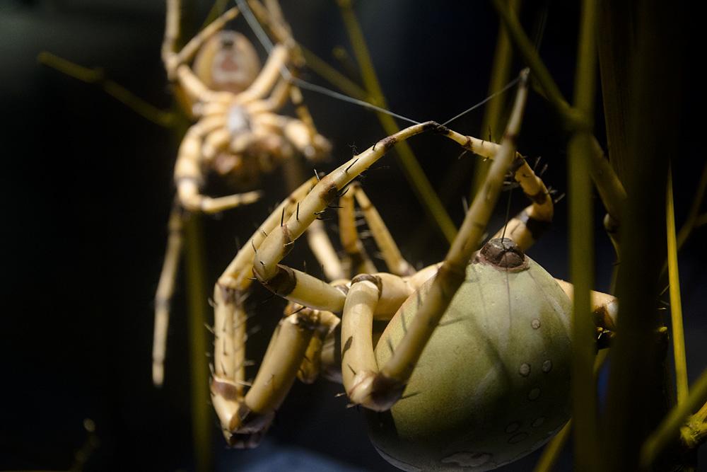 Museum für Naturkunde Berlin, Spinnen von Alfred Keller