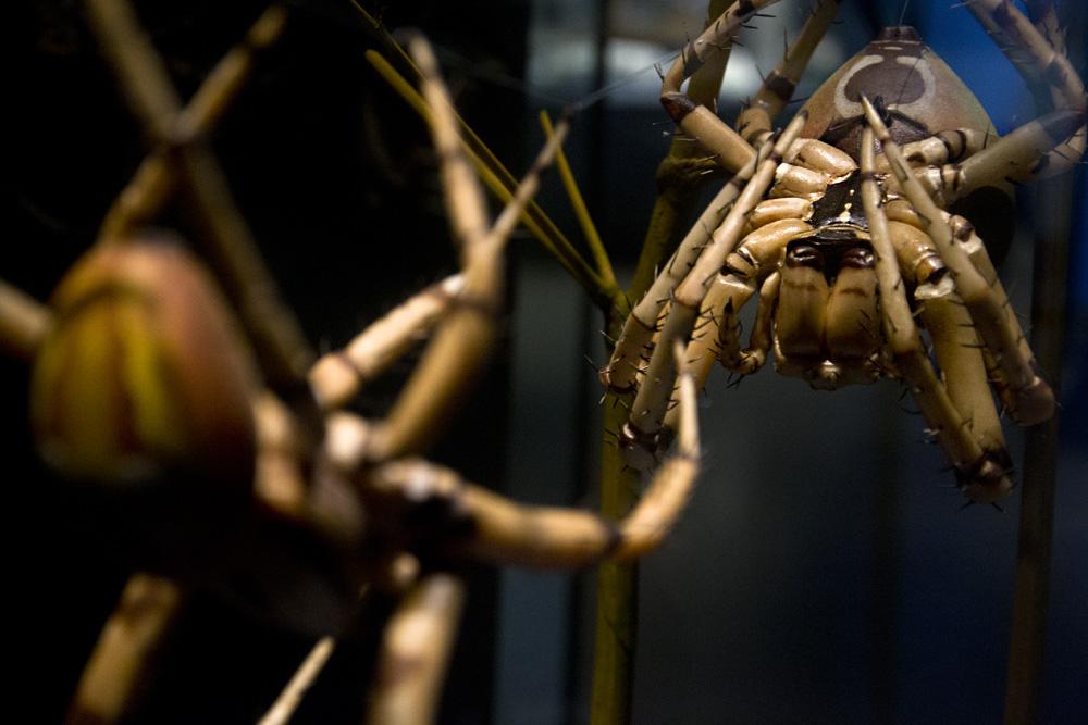 Museum für Naturkunde Berlin, Spinnen-Modelle von Alfred Keller