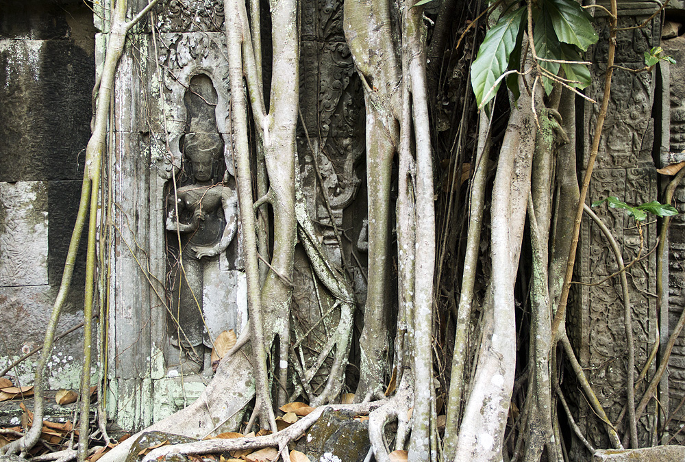 Angkor, Ta Prohm, Apsara, Würgefige