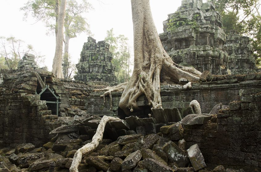Angkor, Ta Prohm, Würgefeige