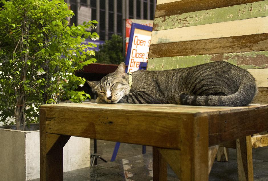 Bangkok, Thanon Chakrabongse, Katze