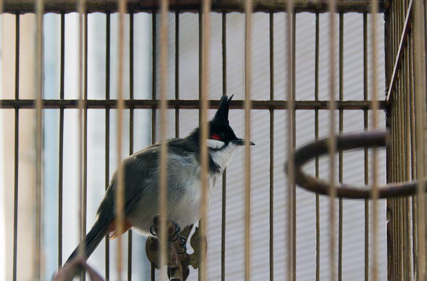 Bangkok, Thanon Chakrabongse, Vogelkäfig
