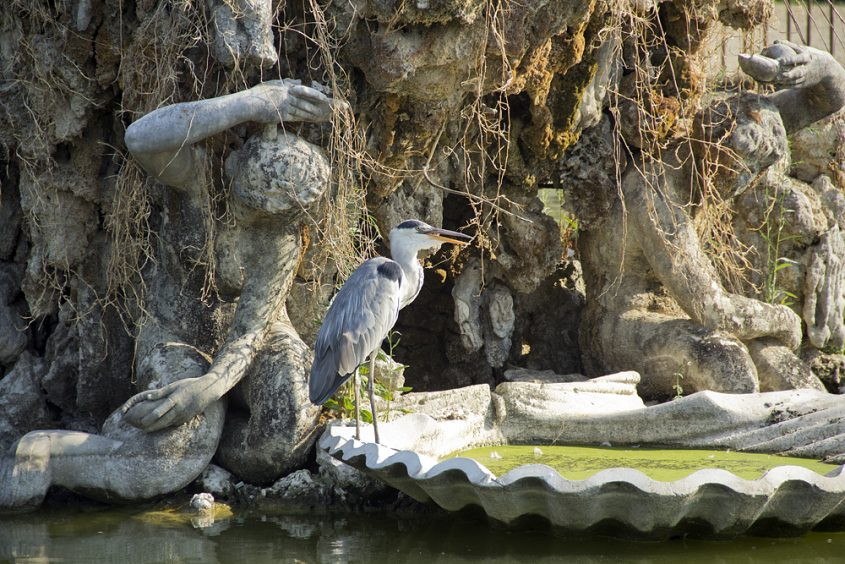 Giardino di Boboli, Neptunbrunnen, Reiher