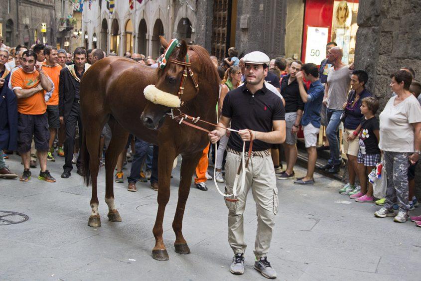 Siena, Palio, Pferd