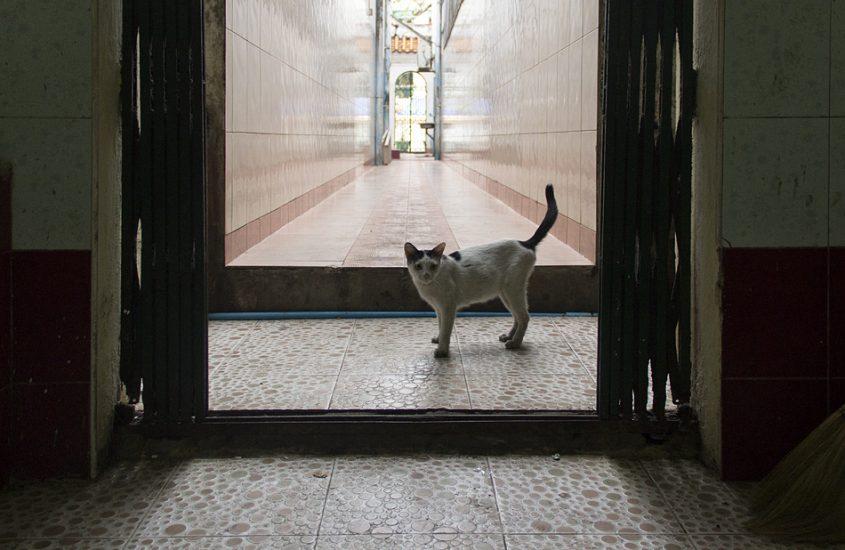 Yangon, Chinesischer Tempel, Katze