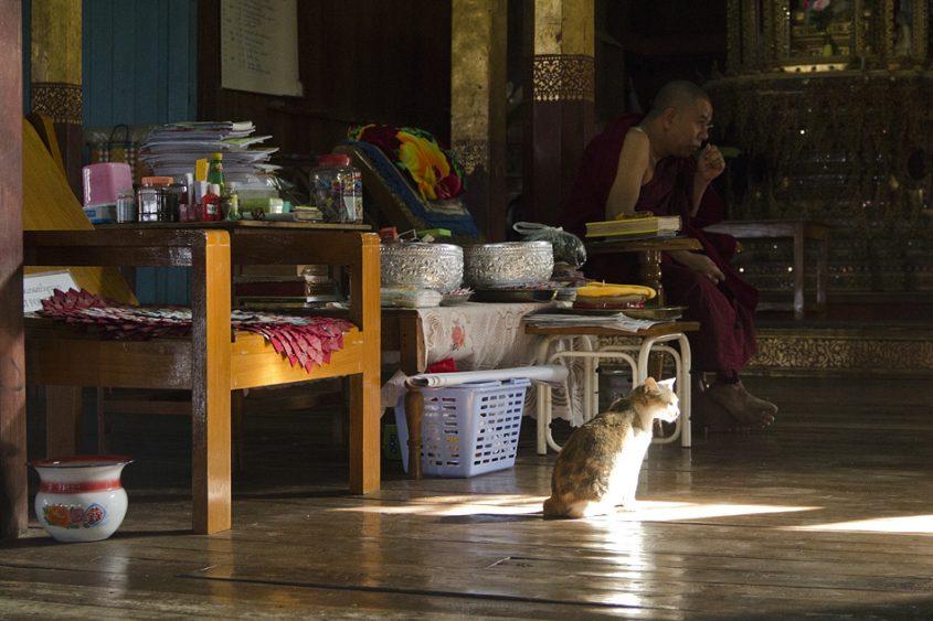 Myanmar, Inle-See, Kloster der springenden Katzen