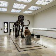 Halle Saale, Mammut von Pfännerhall und Rekonstruktion eines Neandertalers im Landesmuseum für Vorgeschichte