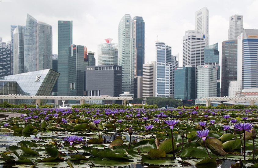 Fabian Fröhlich, Singapore, Water Lily Pond at Marina Bay