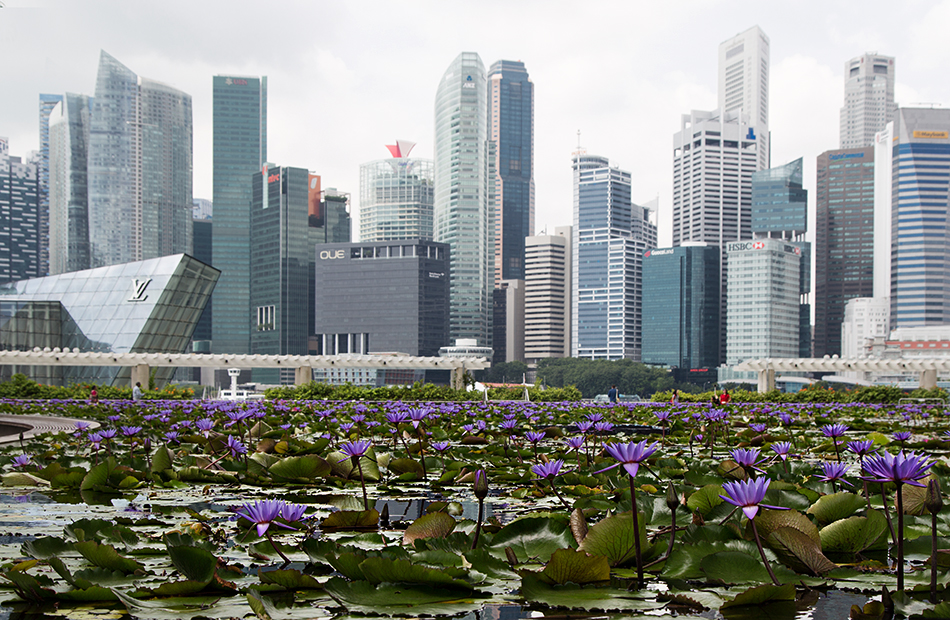 Fabian Fröhlich, Singapore, Water Lily Pond at Marina Bay