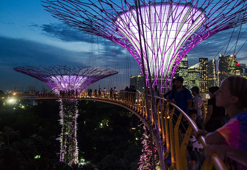 Fabian Fröhlich, Singapore, Gardens by the Bay, Supertrees at night