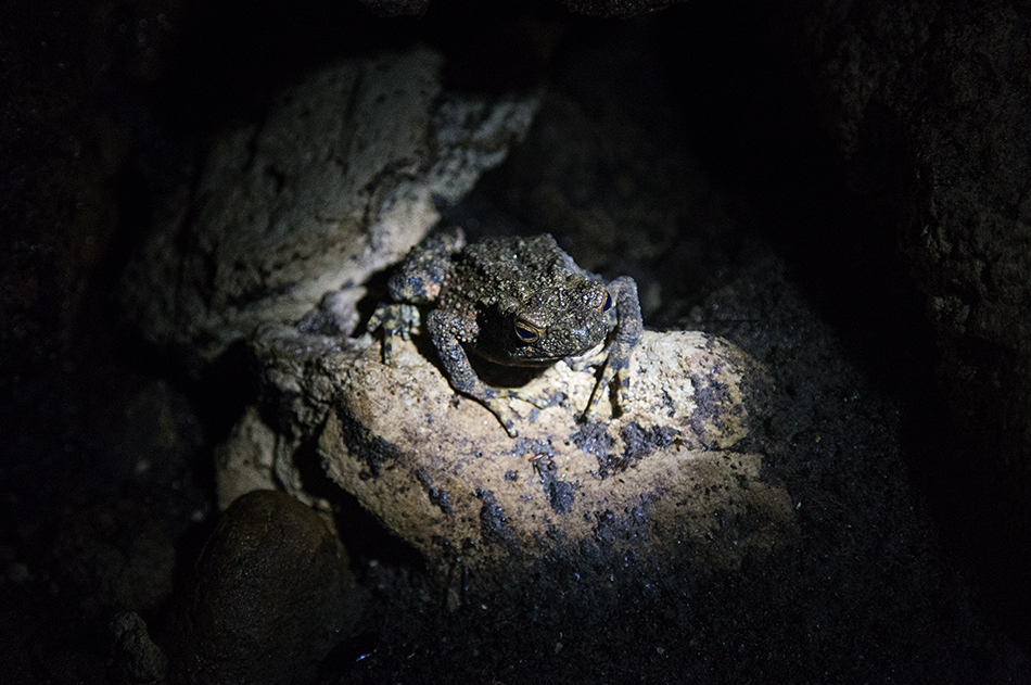 Fabian Fröhlich, Bukit Lawang, Sumatra, Toad