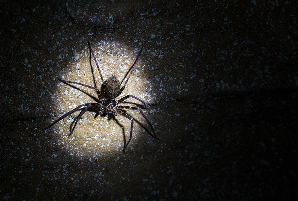 Fabian Fröhlich, Bukit Lawang, Sumatra, Spider