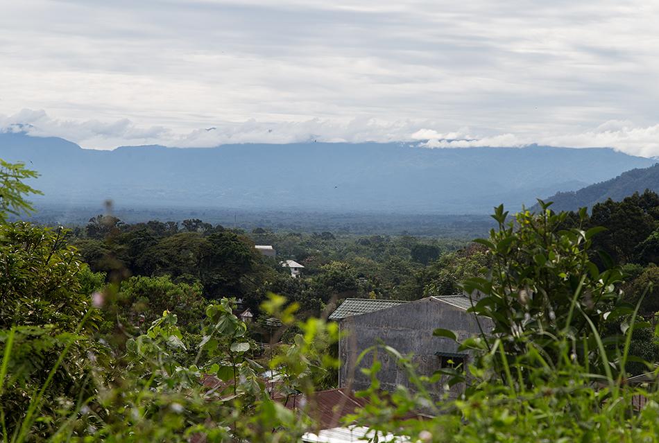 Fabian Fröhlich, Bukit Lawang, Sumatra, Thomas's langur , Panorama