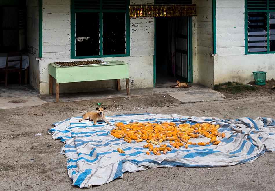 Fabian Fröhlich, Lake Toba, Samosir, Corn
