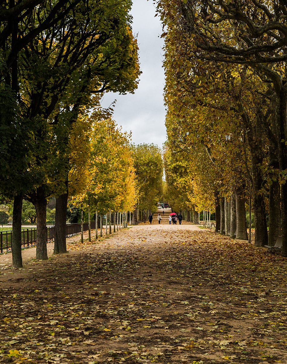 Fabian Fröhlich, Paris, Jardin des Plantes