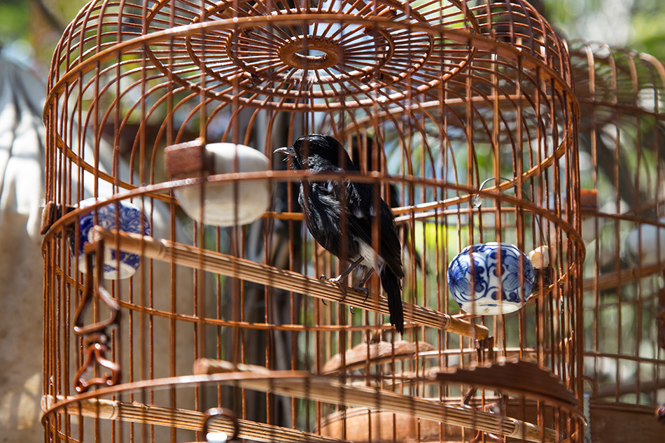 Fabian Fröhlich, Hongkong, Kowloon, Bird Market