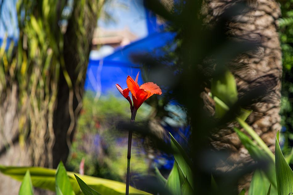 Fabian Fröhlich, Jardin Majorelle Marrakech, Flower