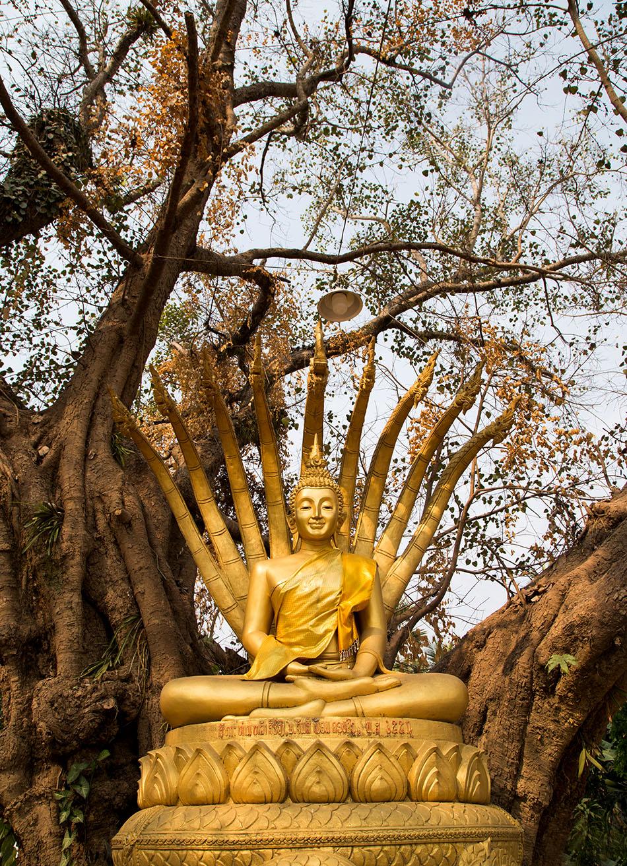 Fabian Fröhlich, Luang Prabang, Buddha at Wat Aham