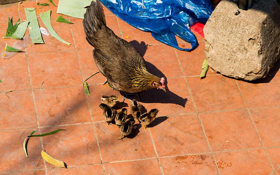 Fabian Fröhlich, Luang Prabang, Chicken