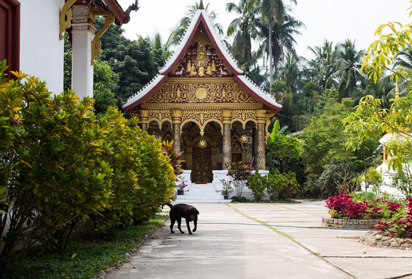 Fabian Fröhlich, Luang Prabang, War Pa Phai