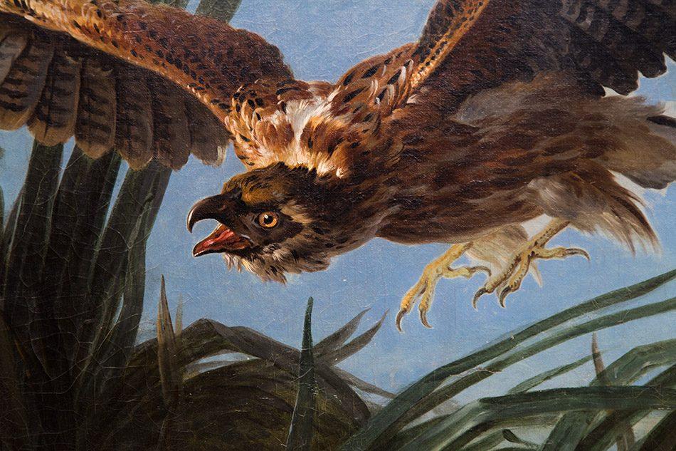 Fabian Fröhlich, Staatliches Museum Schwerin, Jean-Baptiste Oudry, Hawk