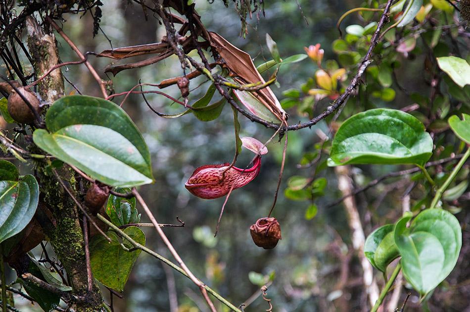 Fabian Fröhlich, Cameron Highlands, Gunung Brinchang, Mossy Forest