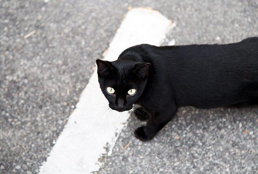 Fabian Fröhlich, Melaka, Cat