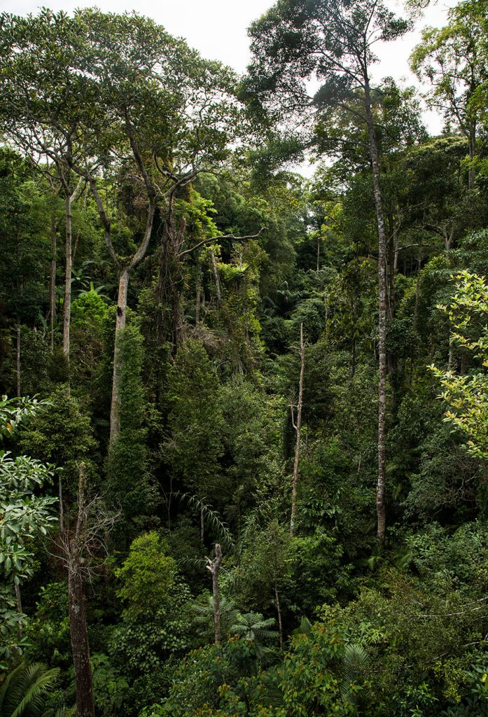 Fabian Fröhlich, Penang Hill, The Habitat
