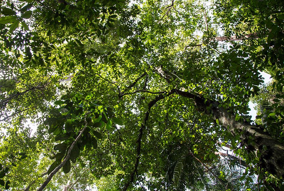 Fabian Fröhlich, Borneo, Bako National Park, Telok Delima Trail