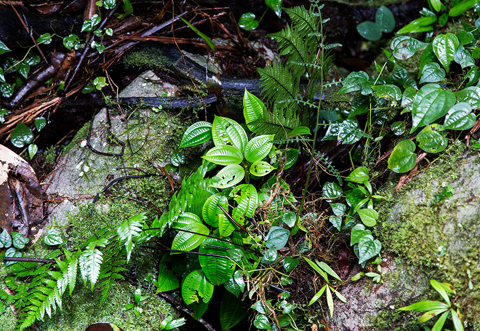 Fabian Fröhlich, Borneo, Bako National Park, Telok Pandan Kecil Trail
