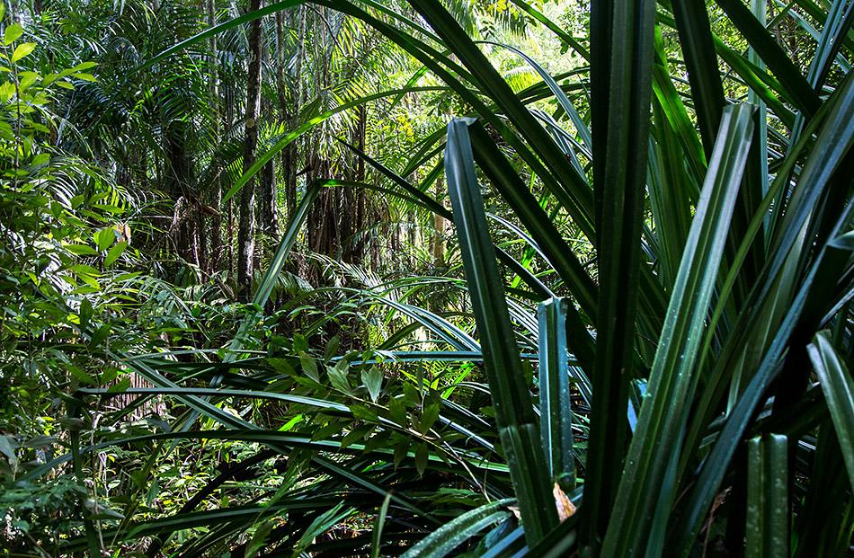 Fabian Fröhlich, Borneo, Bako National Park, Ula Assam Trail