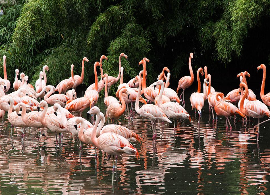 Fabian Fröhlich, Zoo Prag, Flamingos