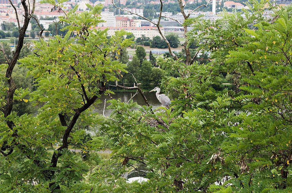 Fabian Fröhlich, Zoo Prague, Aussicht vom Hügel