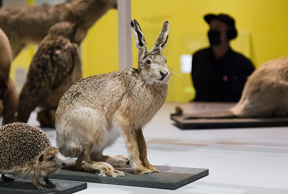 Fabian Fröhlich, Museum für Gestaltung Zürich,  Énergie animale